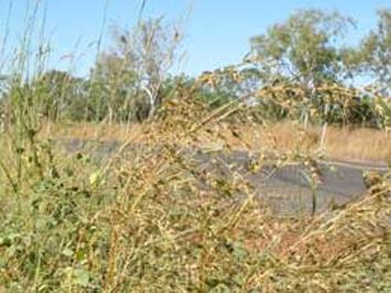 Weed Management Plan for Grader grass