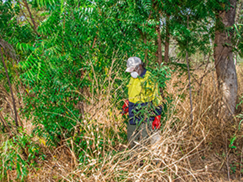 Last Chance For Free Neem Herbicide