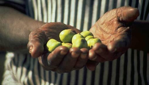 Holding Kakadu Plum