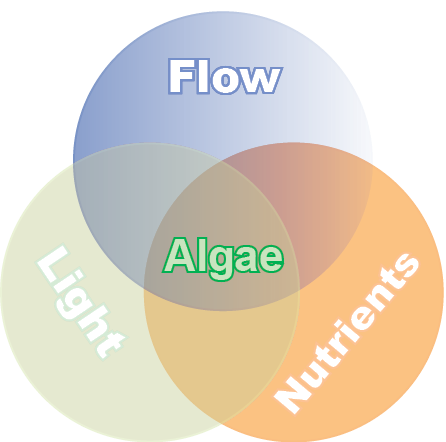 Conditions have to be favourable for all three of these factors to cause an impact on aquatic plant and algal growth.
